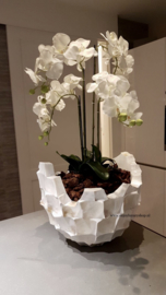 Schelpenvaas 'Broken Bowl' met orchidee - parelmoer wit