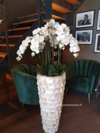 Hoge schelpenvaas opgemaakt met orchideeën (BO)