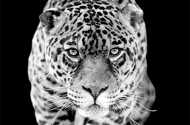 AluArt Kunstwerk - Jaguar 80x120
