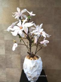 Schelpenpot met Magnolia  (24x17)