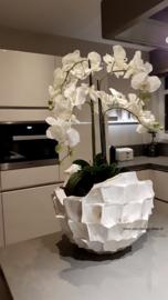 Schelpenvaas 'Broken Bowl' opgemaakt met orchidee - parelmoer wit