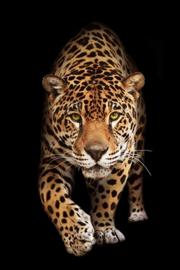 AluArt Kunstwerk - Wild cat Panther