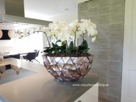 Schelpenvaas ovaal opgemaakt met orchideeën (Pearl)