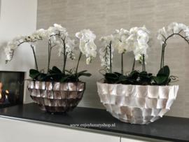 Schelpenvaas boot opgemaakt met orchideeën - bruin/rosé (Bo)