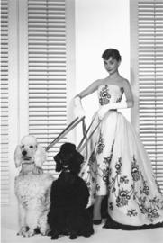 AluArt Kunstwerk - Audrey Hepburn dogs