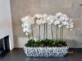 Schelpenbak opgemaakt met orchideeën / zilvergrijs