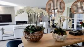 Grote Schelpenvaas Bowl (60cm) met orchidee - bruin/rosé