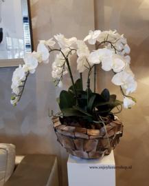 Schelpenvaas Bowl opgemaakt met orchidee - parelmoer wit