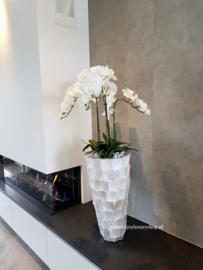 Hoge schelpenvaas (60cm) met orchideeën