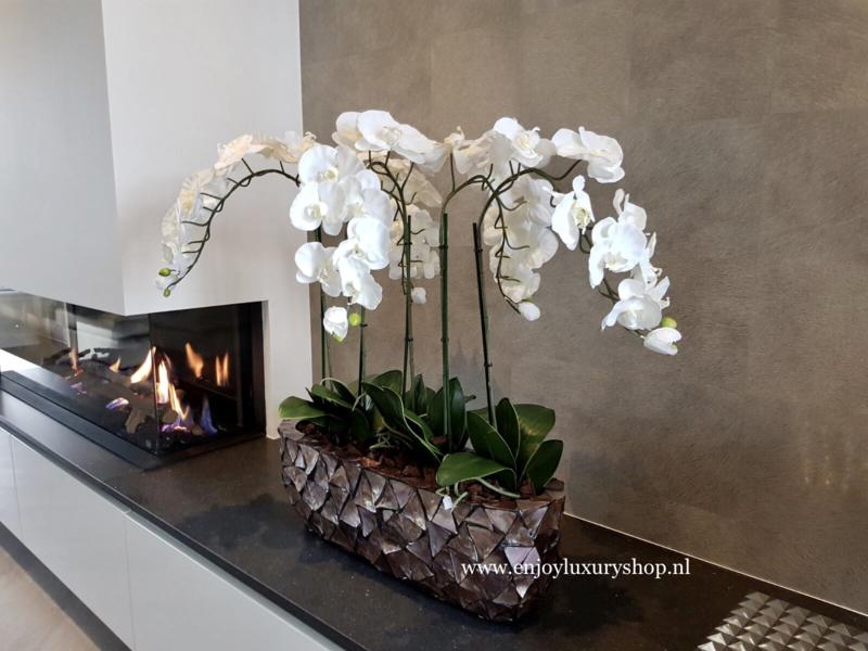 Schelpenbak opgemaakt met orchideeën - bruin/rosé