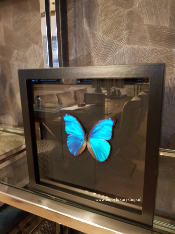 Vlinder PapilioMorpho Didius in schilderij (blauw)