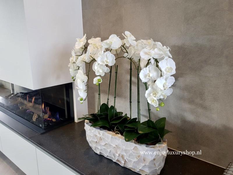 Schelpenbak opgemaakt met orchideeën / parelmoer wit