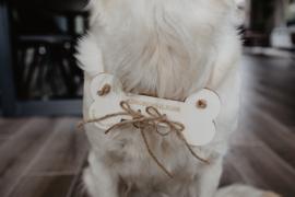 Ringbeveiliger | hond
