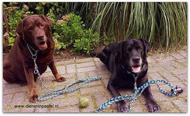 verstelbare hondenriem