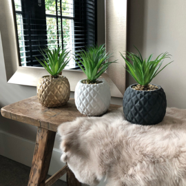 Funky plants