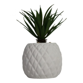 Pineapple plant wit (ananas)
