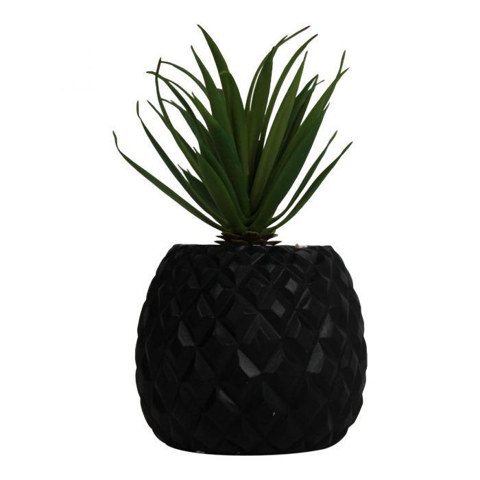 Pineapple plant zwart (ananas)