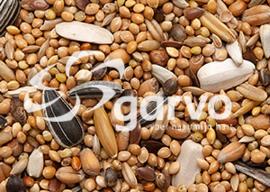 Garvo Grote parkietenzaad 1 kg