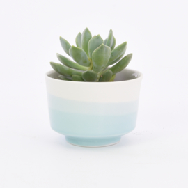 Dip   Plant   M   White 057