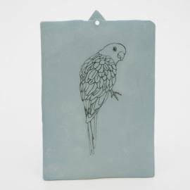 Parakeet - Nr 2