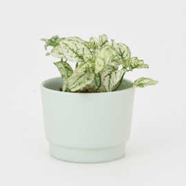 Mini flowerpot - XS - Mint