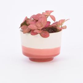 Dip   Plant   M   Nude 059