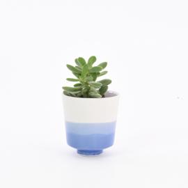 Dip   Plant   S   Mouse grey 094