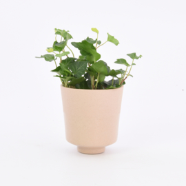 Dip   Plant   S   Sand 00