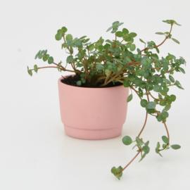 Mini flowerpot - XXS - Red
