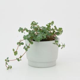 Mini flowerpot - XS - Mouse grey