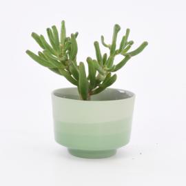Dip   Plant   M   Green 071