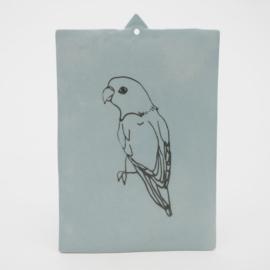 Parakeet - Nr 3