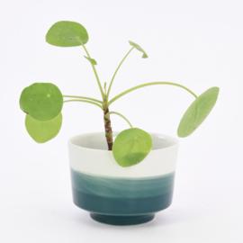 Dip   Plant   M   Mint 062