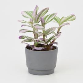 Mini flowerpot - XS - Dark grey