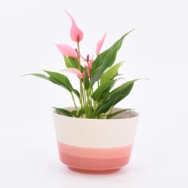 Dip   Plant   L   Nude 059