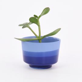 Dip   Plant   M   Cobalt 094