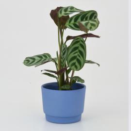 Mini flowerpot - XS - Cobalt