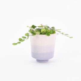 Dip   Plant   S   Pink 077