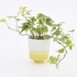 Dip   Plant   S   Mint 084