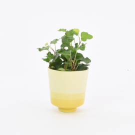 Dip   Plant   S   Yellow 084