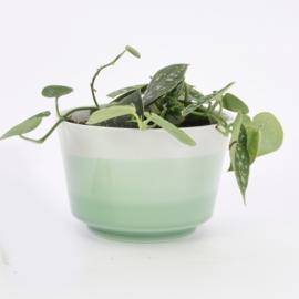 Dip   Plant   L   Mint 071