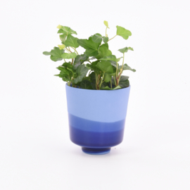 Dip   Plant   S   Cobalt 094