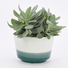 Dip   Plant   L   Mint 062