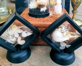 Floating frame met Vogel schedel en droogbloemen - Kanarie of Kauw