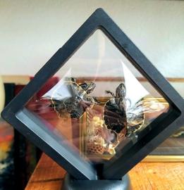 Floating frame met 2 gedroogde Schildpadjes