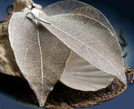 Prachtige hanger, gemaakt van een echt Blad skelet,  in Antiek Zilver Kleur Metaal