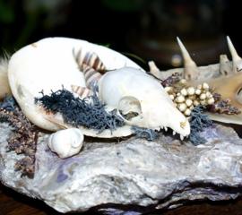 Schedel op Mineraal: Tupaya & Snoek-kaak