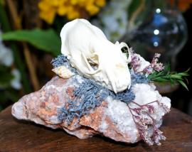 Schedel op Mineraal: Amerikaanse Nerts