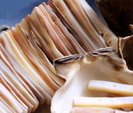set/10 Grote Kralen/2-rij Verdelers: Paarlemoer Schelp Barok - 41 mm - Naturel Tinten