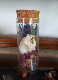 Eekhoorn schedel met droogbloemen in Stolp-Flesje - Glaucomys sabrinus